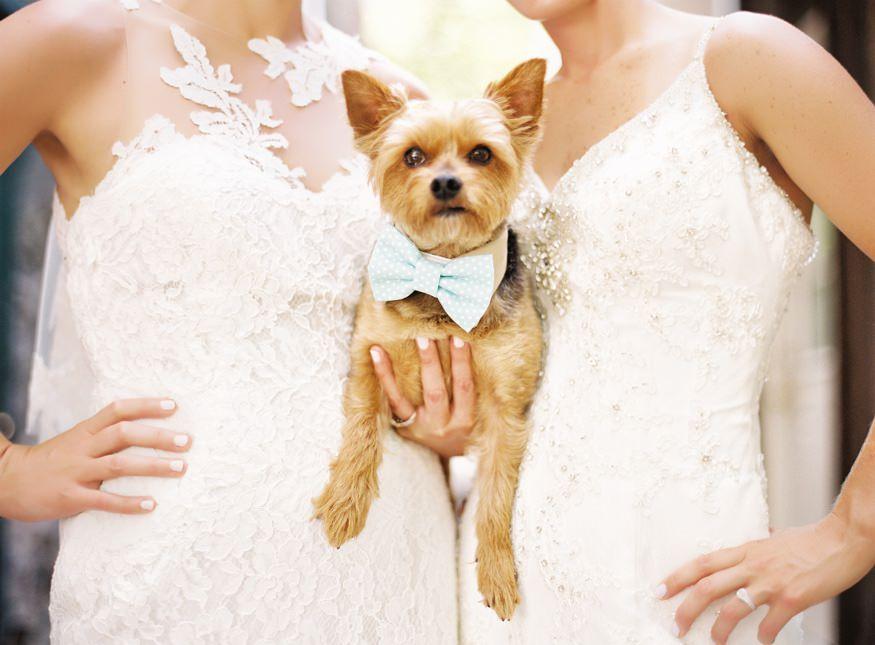 Holly Hedge same sex wedding portraits with their dog.
